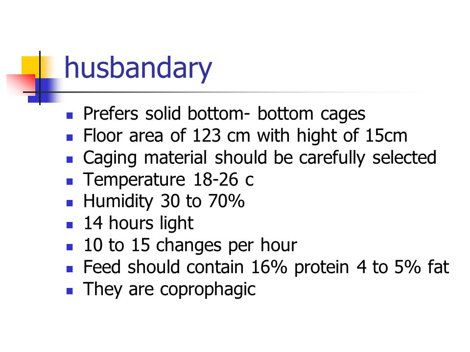 husbandary Prefers solid bottom- bottom cages