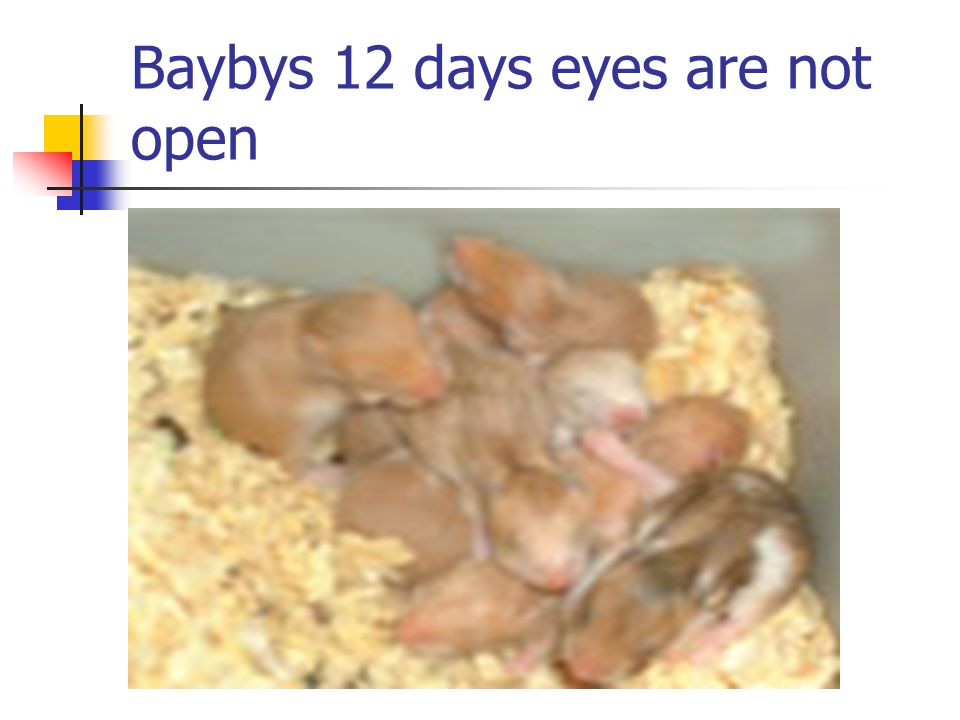 Baybys 12 days eyes are not open
