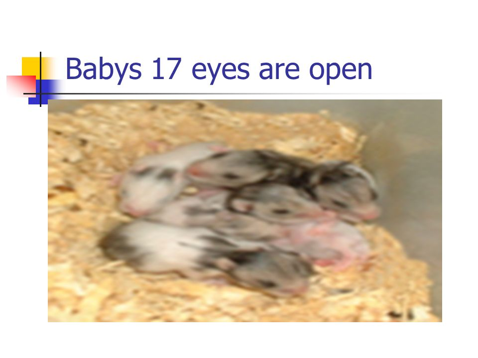 Babys 17 eyes are open
