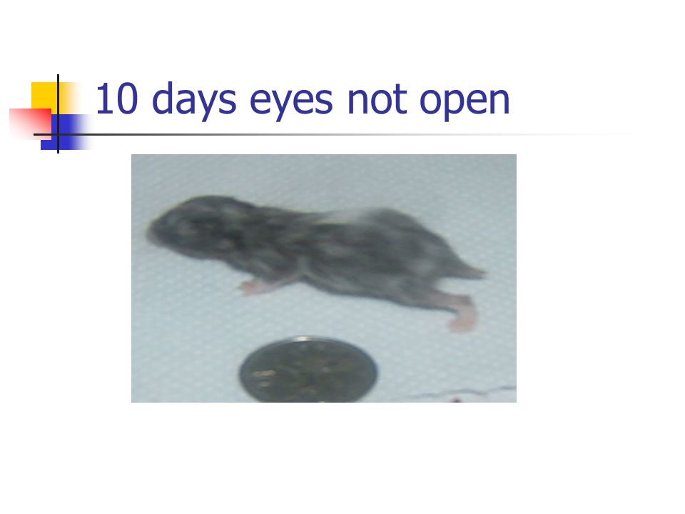 10 days eyes not open