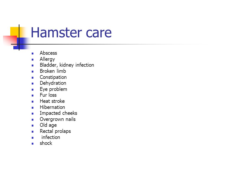 Hamster care Abscess Allergy Bladder, kidney infection Broken limb