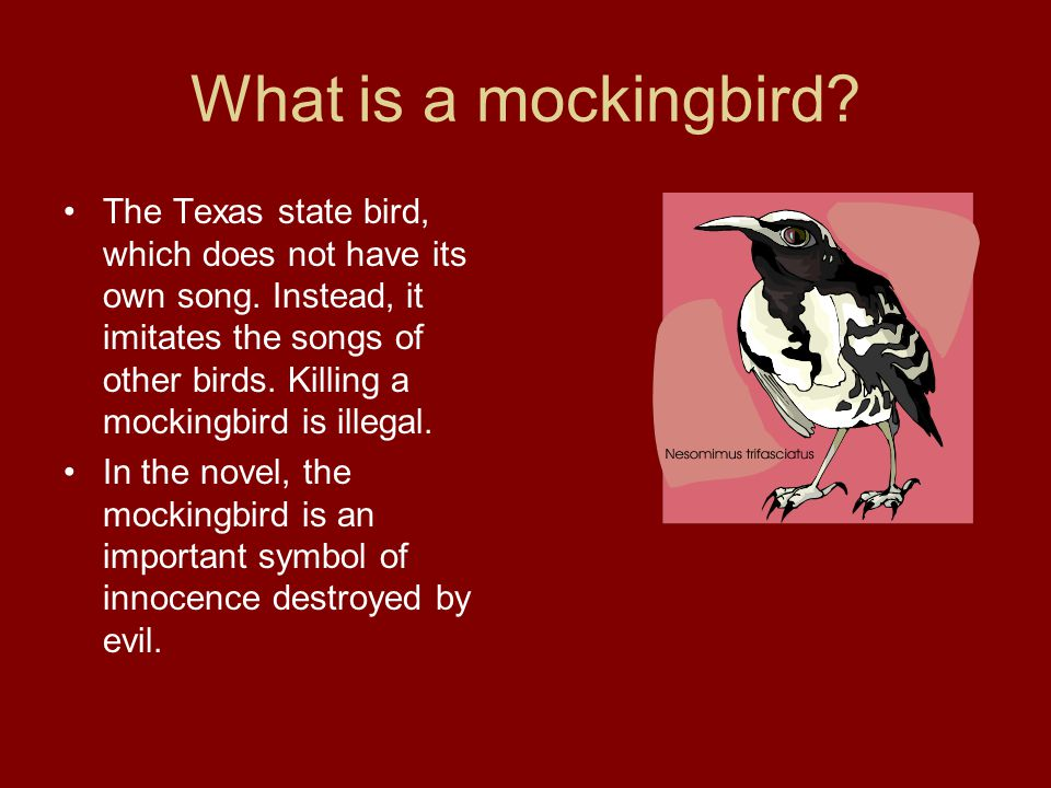 What is a mockingbird