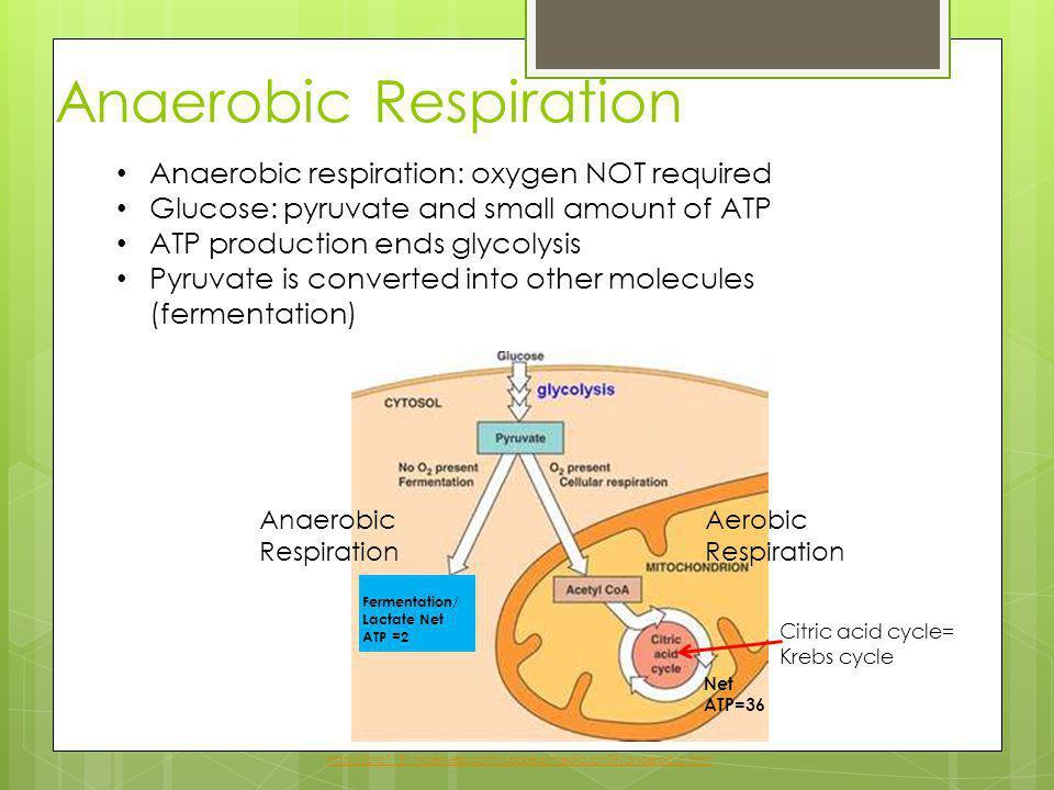 Anaerobic Respiration