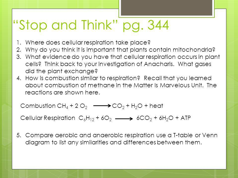 Stop and Think pg. 344 Where does cellular respiration take place