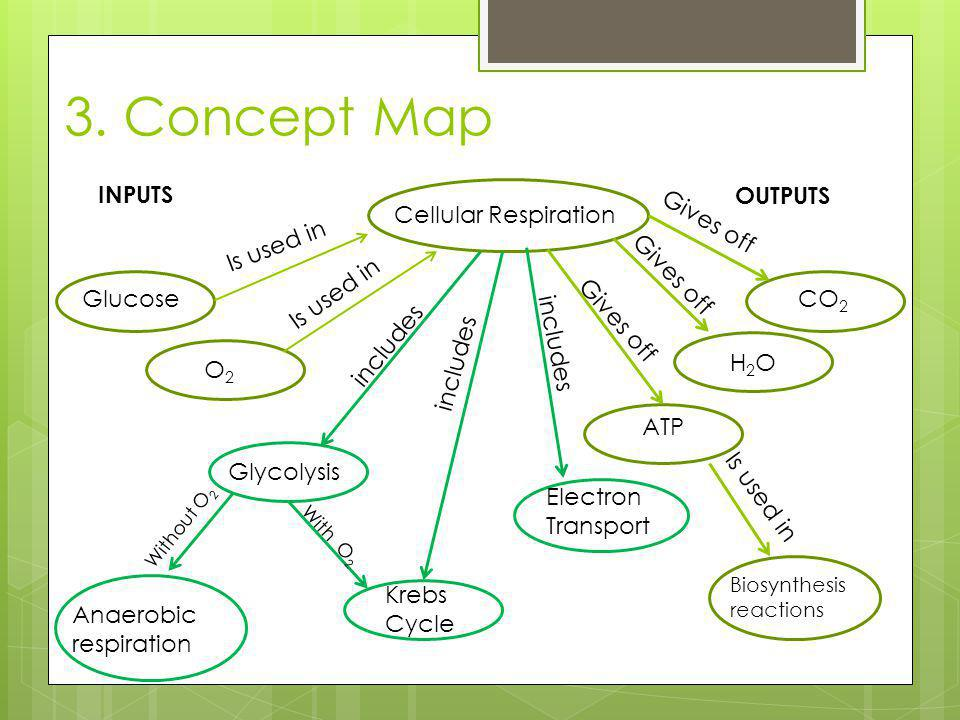 3. Concept Map Cellular Respiration Is used in Glucose O2 Glycolysis