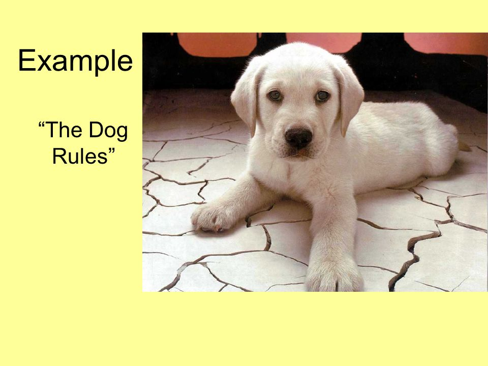 Example The Dog Rules