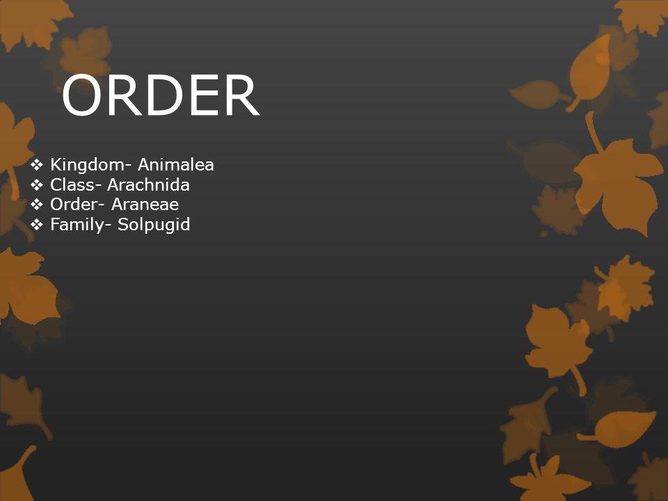 ORDER Kingdom- Animalea Class- Arachnida Order- Araneae