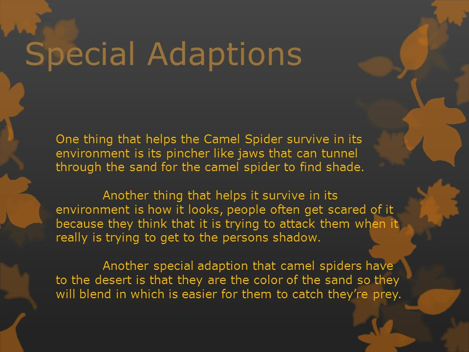 Special Adaptions