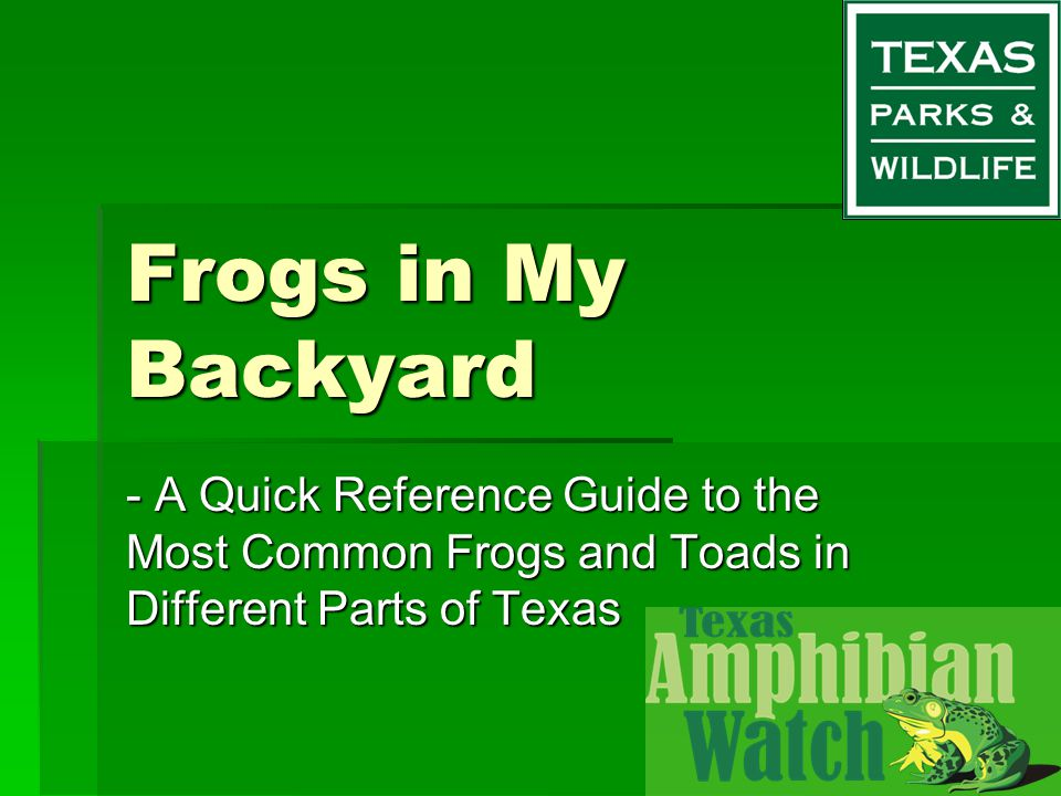 Frogs in My Backyard - A Quick Reference Guide to the Most Common Frogs and Toads in Different Parts of Texas.