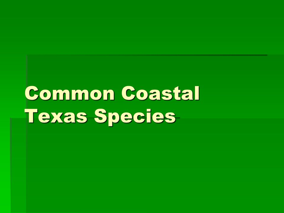 Common Coastal Texas Species