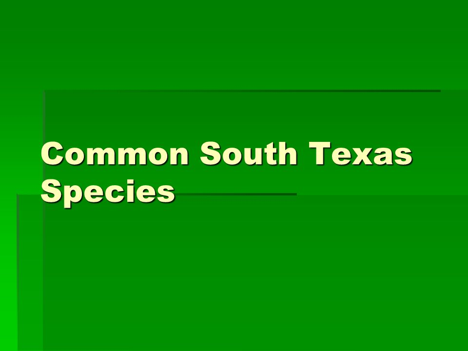 Common South Texas Species