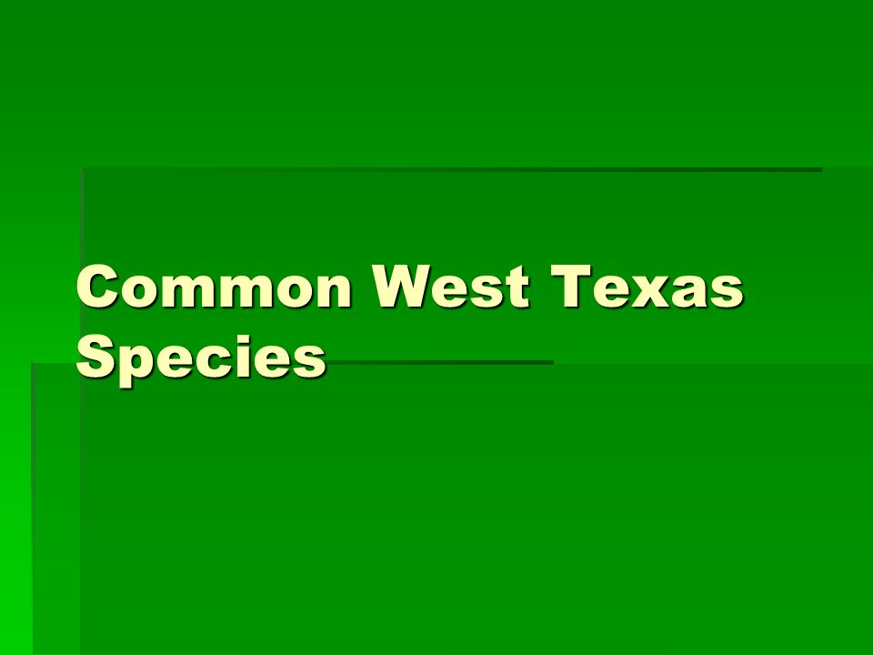Common West Texas Species