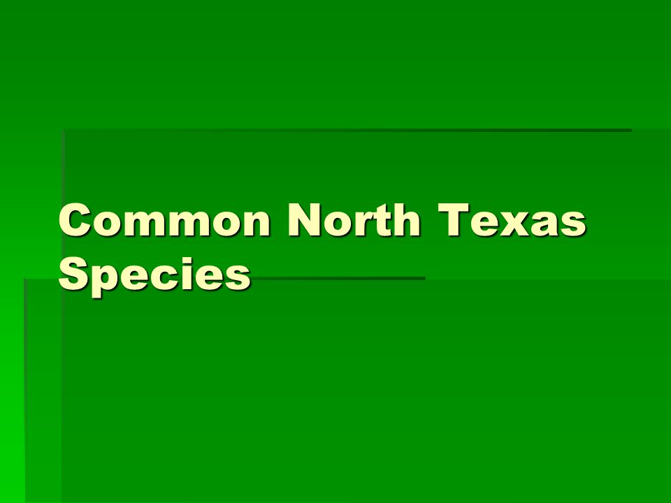 Common North Texas Species