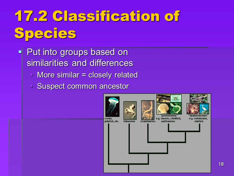 17.2 Classification of Species