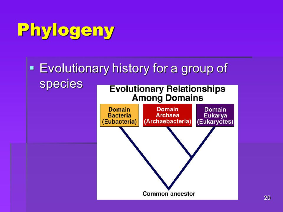 Phylogeny Evolutionary history for a group of species