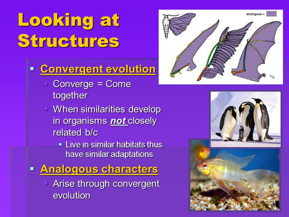 Looking at Structures Convergent evolution Analogous characters