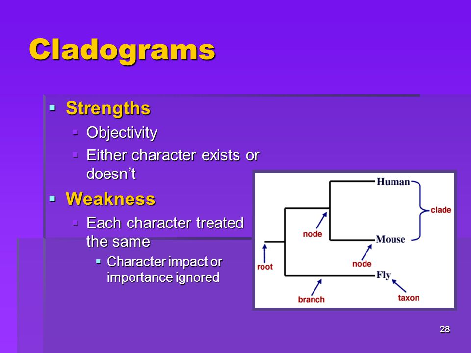 Cladograms Strengths Weakness Objectivity