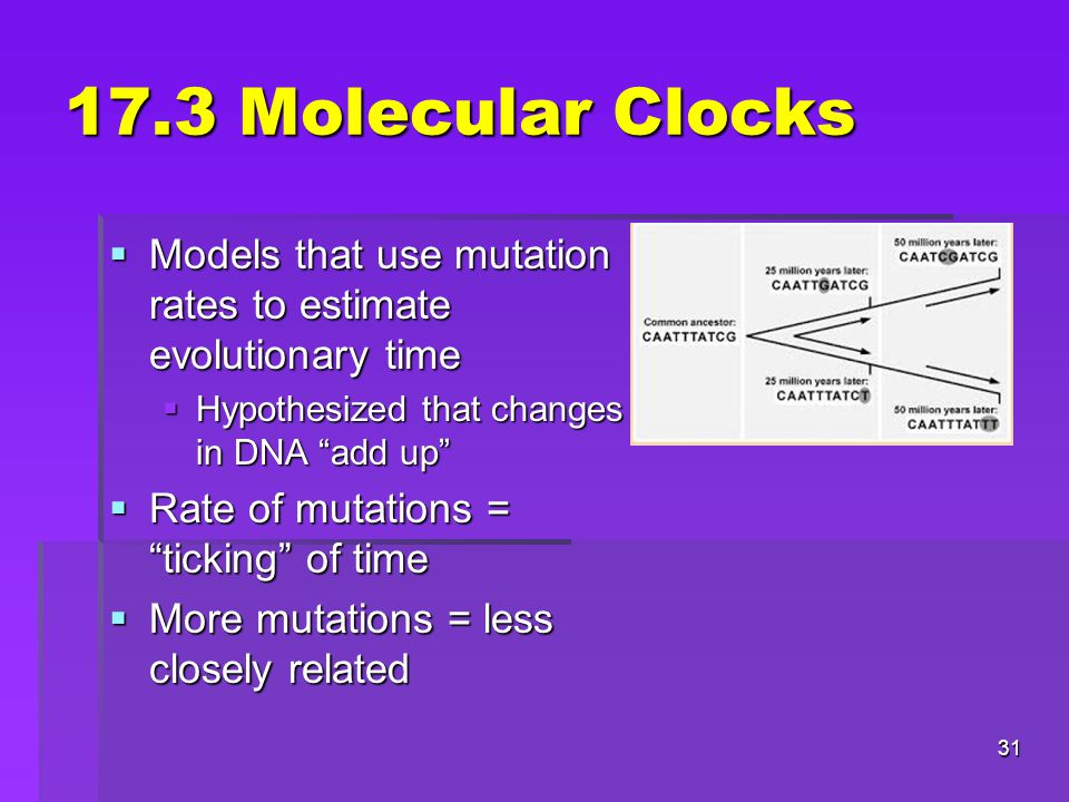 17.3 Molecular Clocks Models that use mutation rates to estimate evolutionary time. Hypothesized that changes in DNA add up