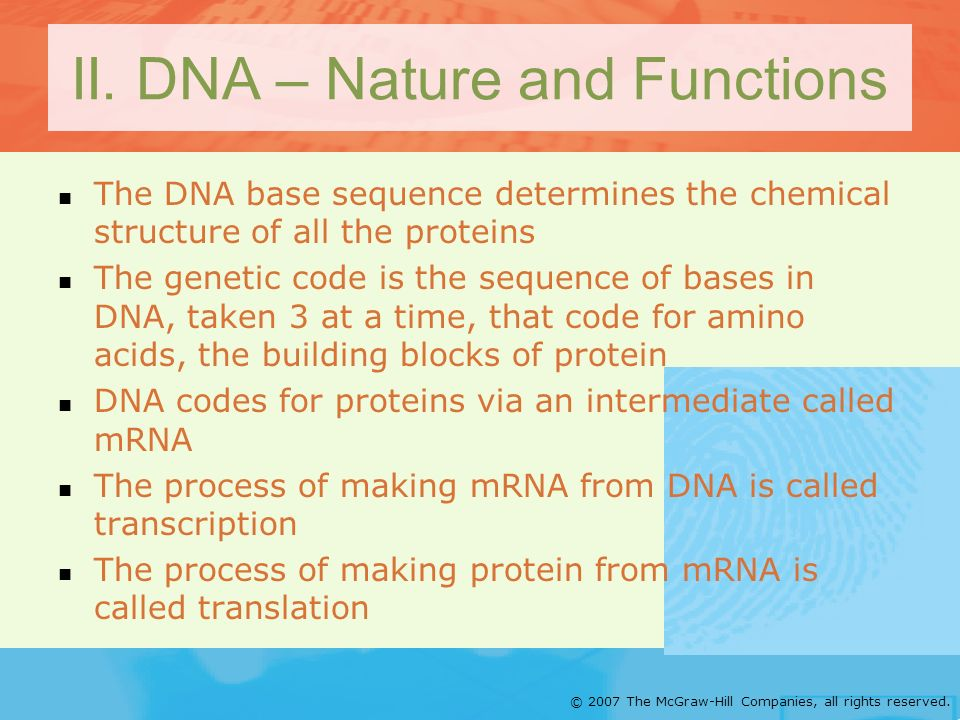 II. DNA – Nature and Functions
