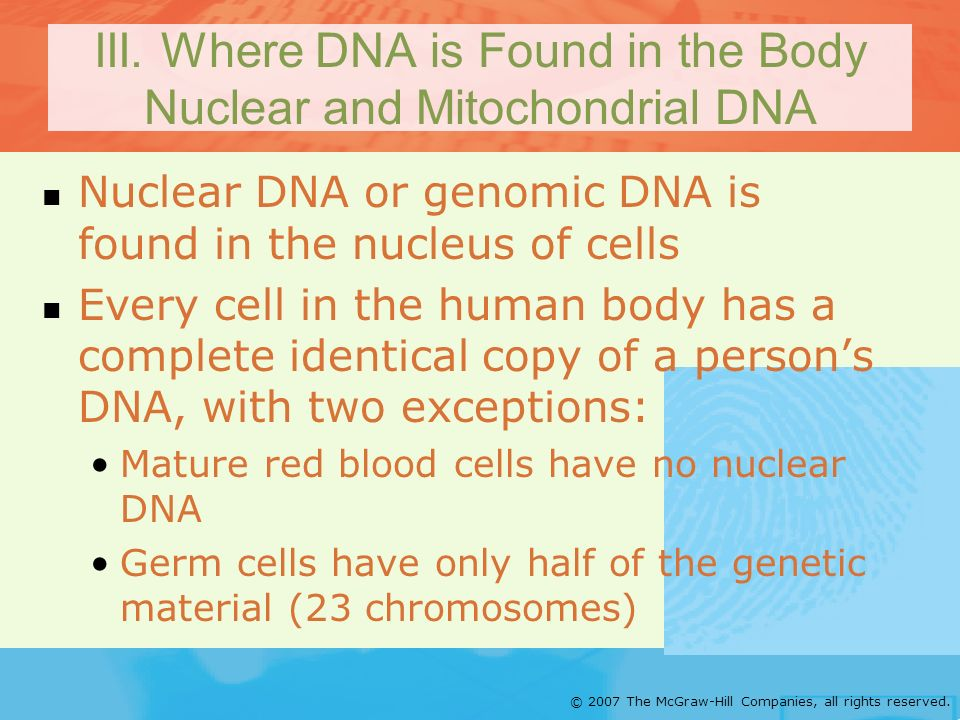 III. Where DNA is Found in the Body Nuclear and Mitochondrial DNA