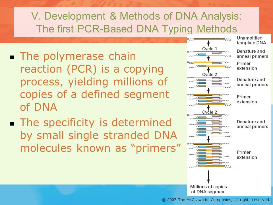 V. Development & Methods of DNA Analysis: The first PCR-Based DNA Typing Methods