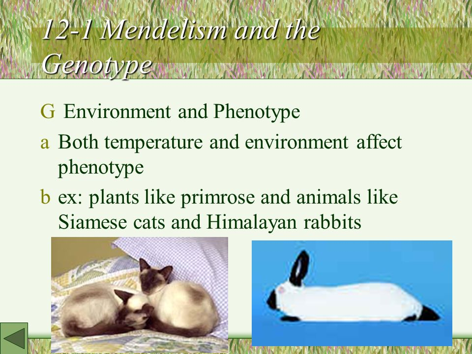 12-1 Mendelism and the Genotype