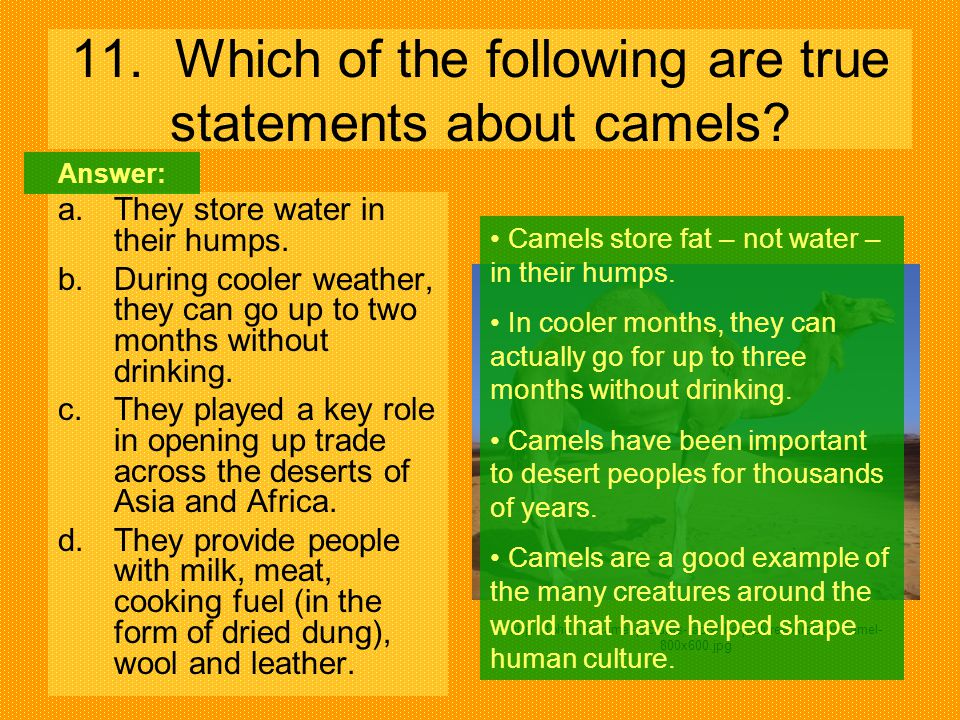 11. Which of the following are true statements about camels