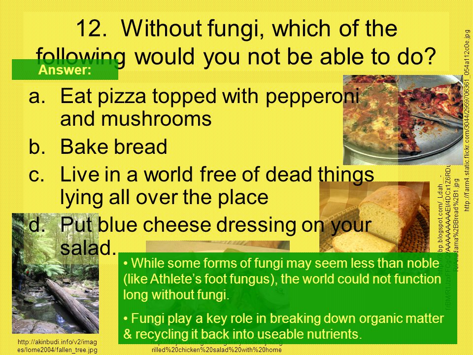 12. Without fungi, which of the following would you not be able to do