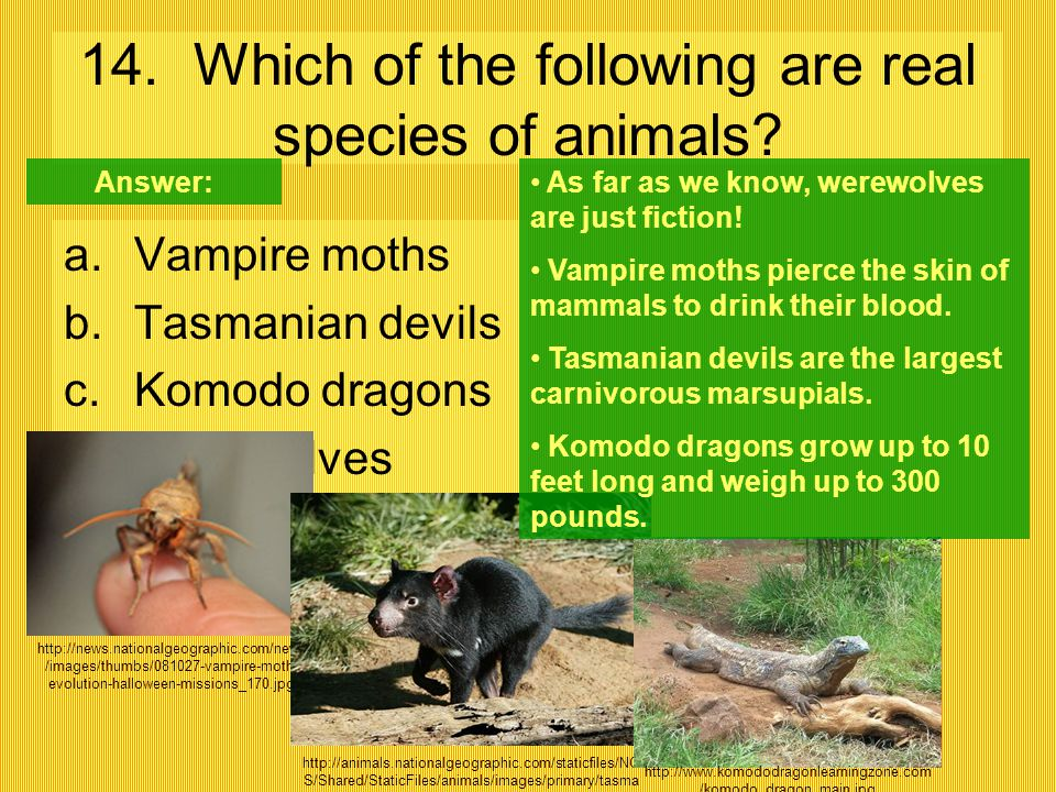 14. Which of the following are real species of animals