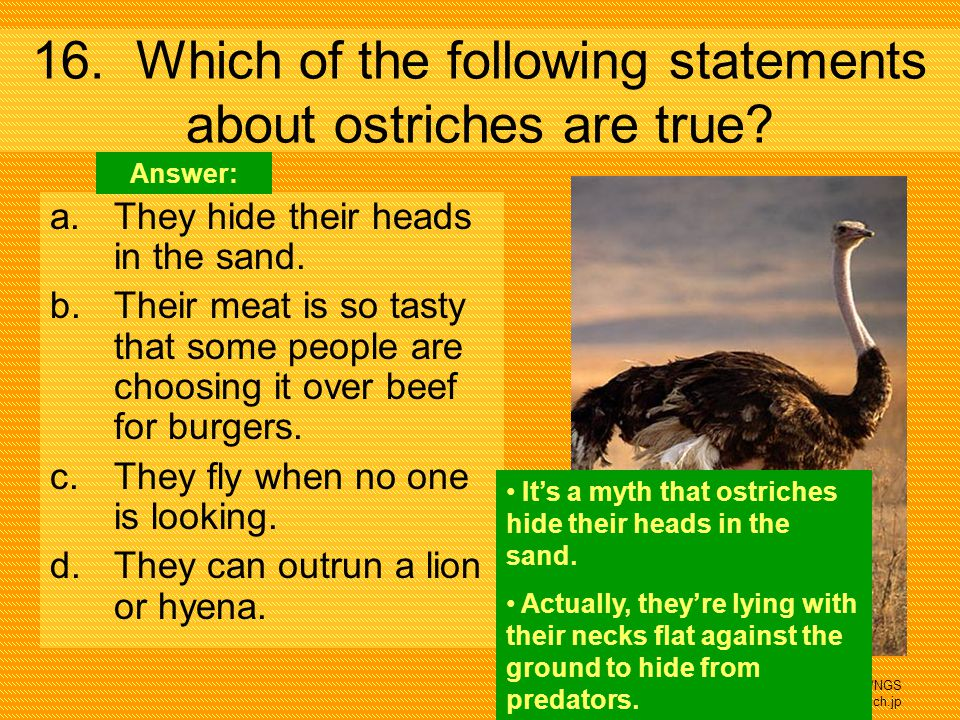 16. Which of the following statements about ostriches are true