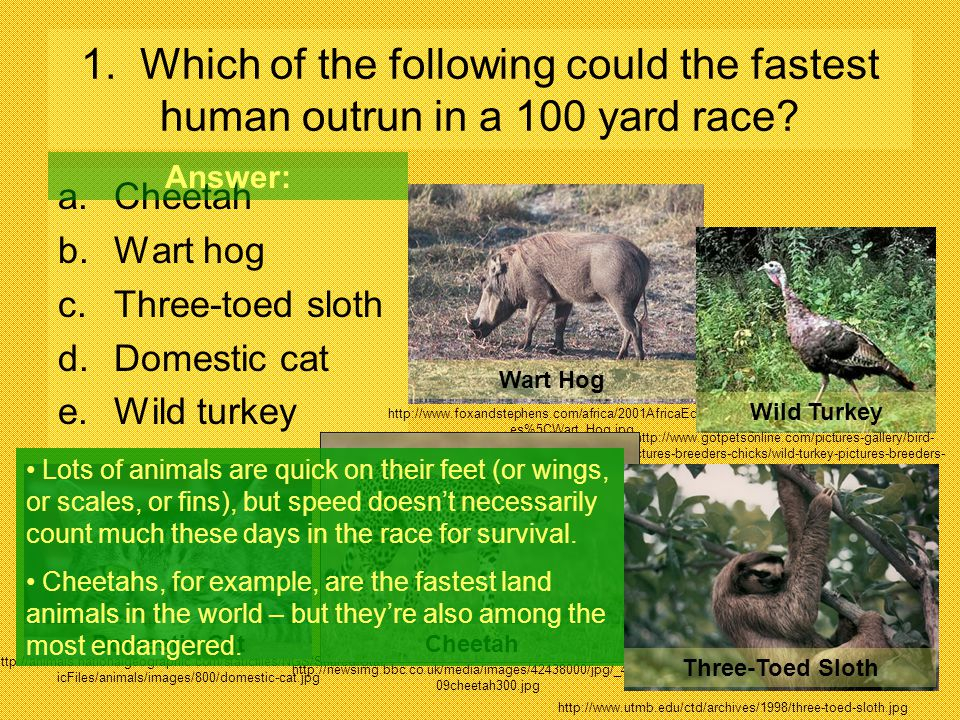 1. Which of the following could the fastest human outrun in a 100 yard race
