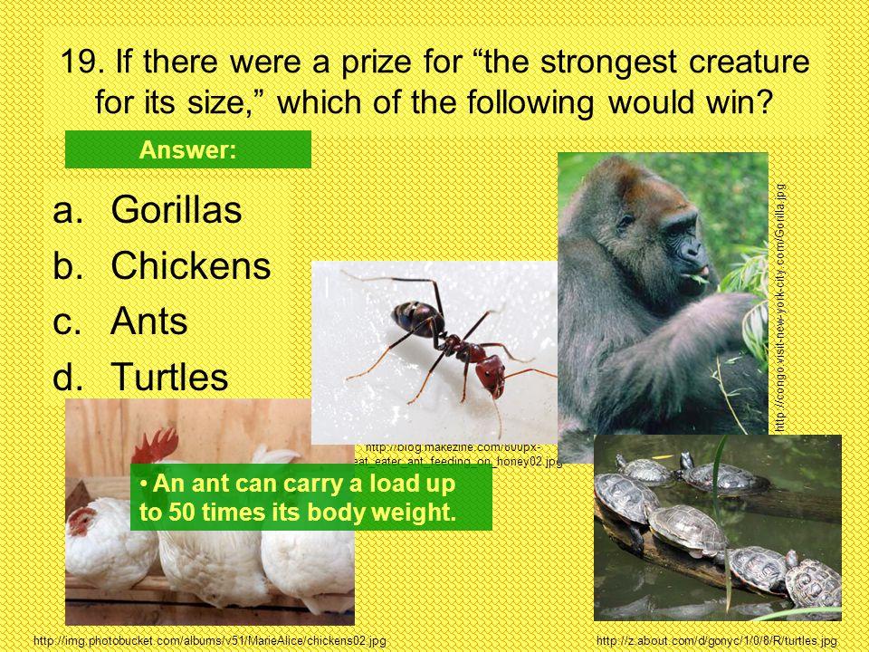 Gorillas Chickens Ants Turtles