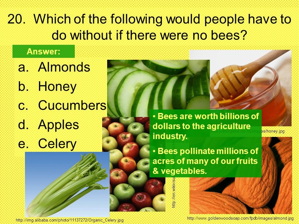 20. Which of the following would people have to do without if there were no bees