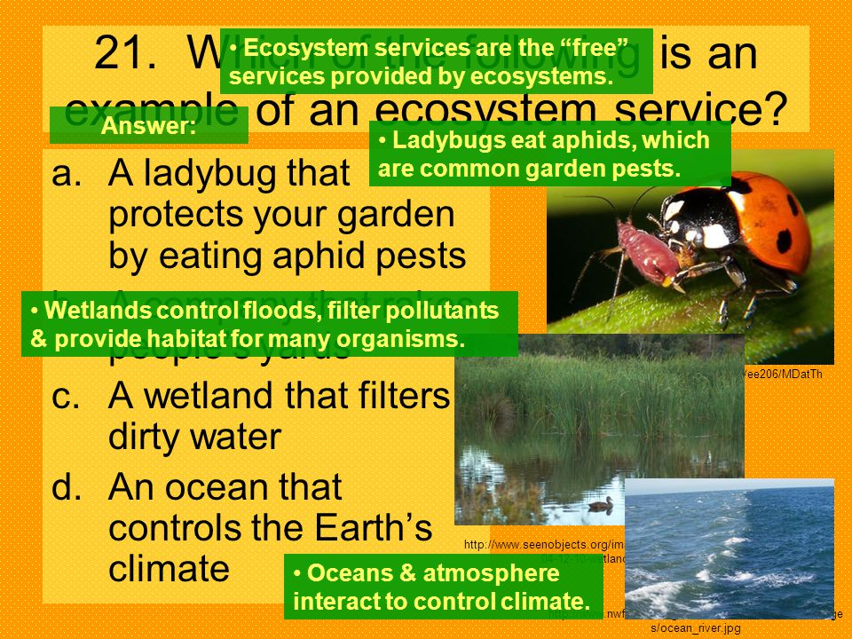 21. Which of the following is an example of an ecosystem service