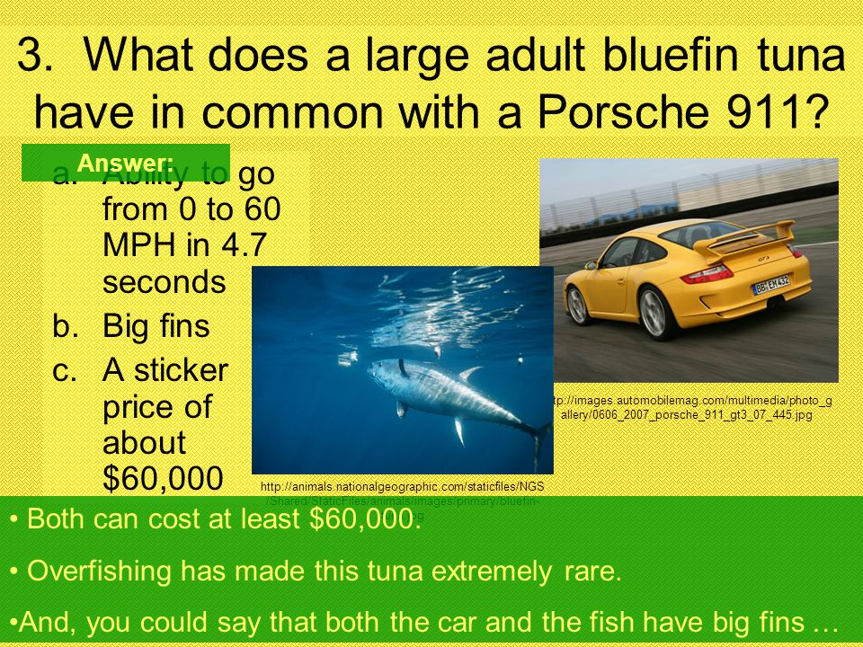 3. What does a large adult bluefin tuna have in common with a Porsche 911