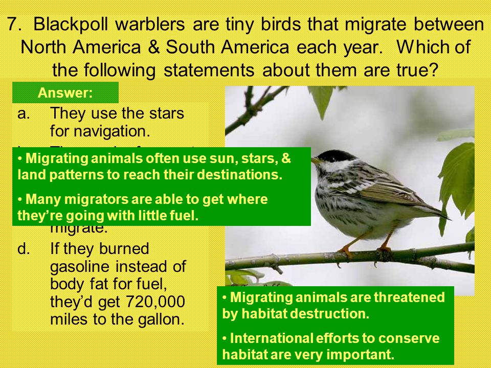 7. Blackpoll warblers are tiny birds that migrate between North America & South America each year. Which of the following statements about them are true
