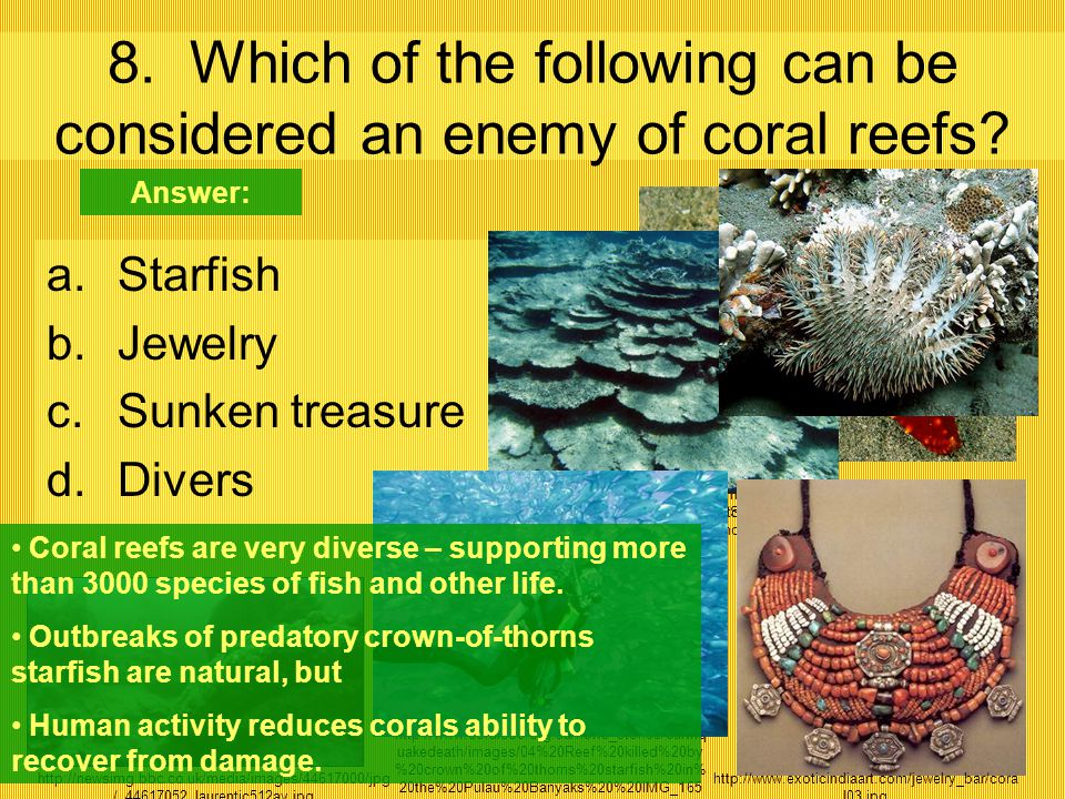 8. Which of the following can be considered an enemy of coral reefs