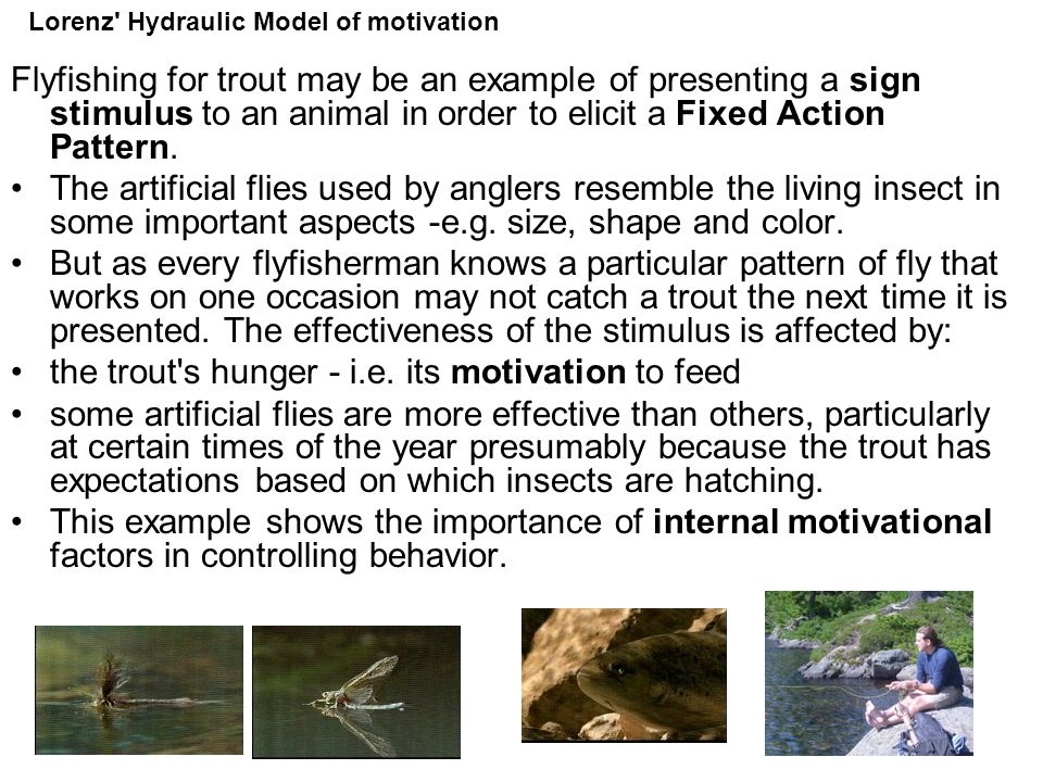the trout s hunger - i.e. its motivation to feed