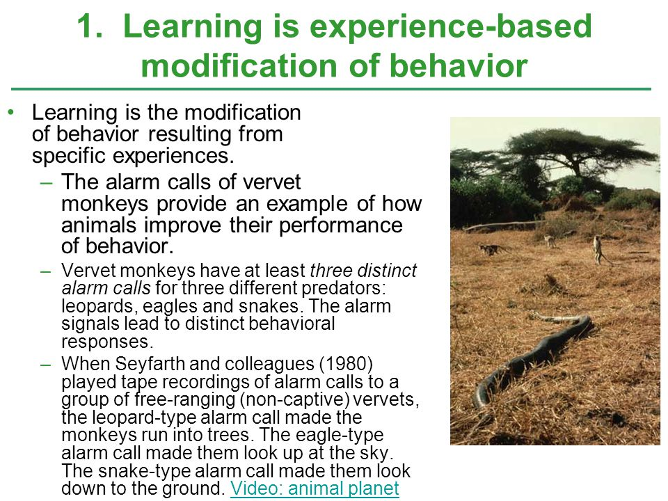 1. Learning is experience-based modification of behavior