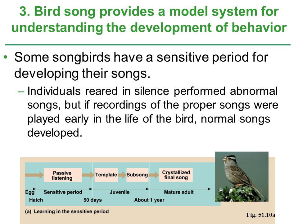 Some songbirds have a sensitive period for developing their songs.