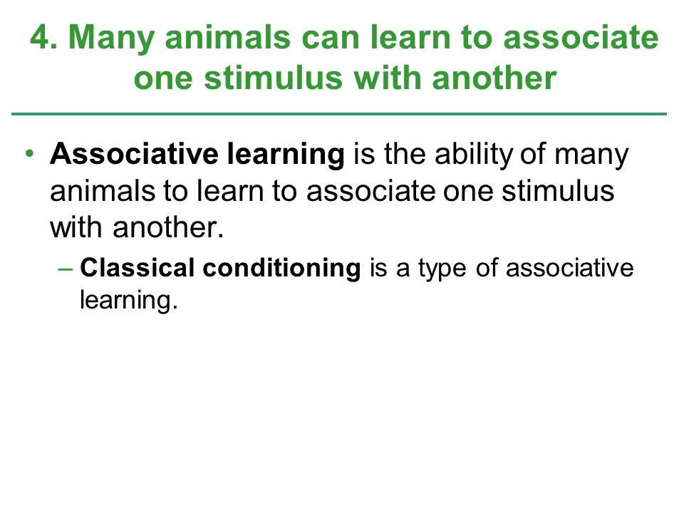 4. Many animals can learn to associate one stimulus with another