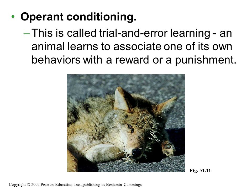 Operant conditioning. This is called trial-and-error learning - an animal learns to associate one of its own behaviors with a reward or a punishment.