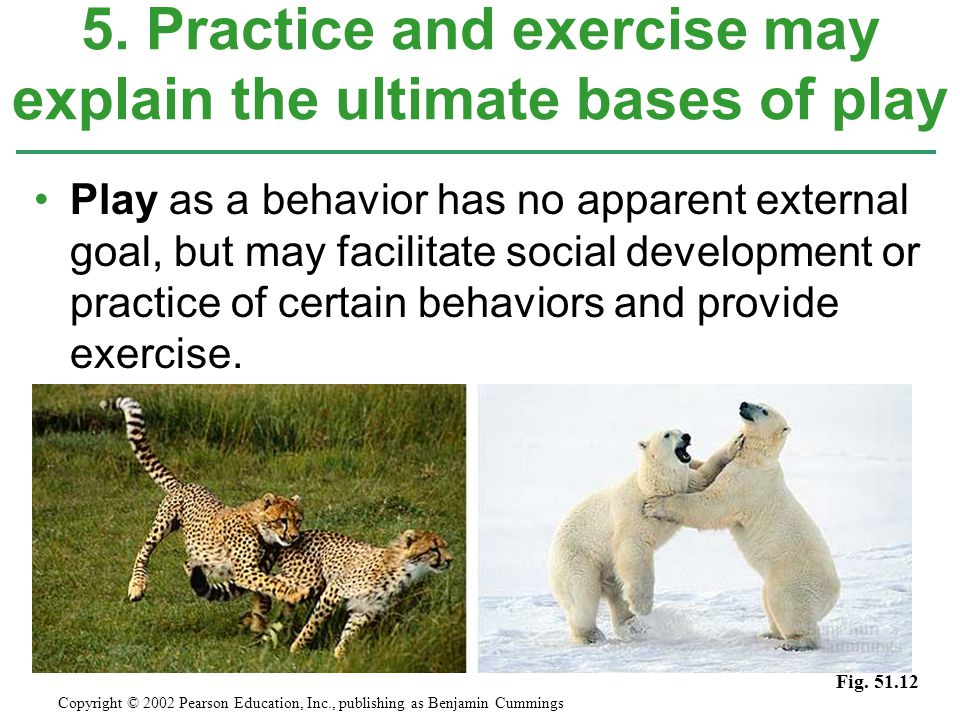 5. Practice and exercise may explain the ultimate bases of play