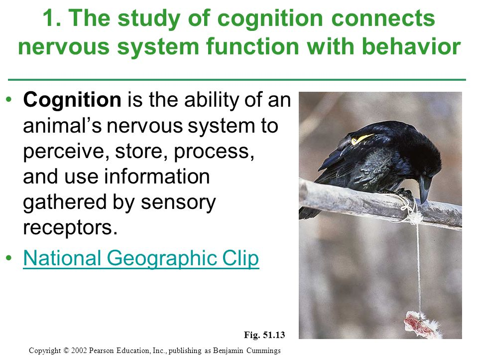1. The study of cognition connects nervous system function with behavior