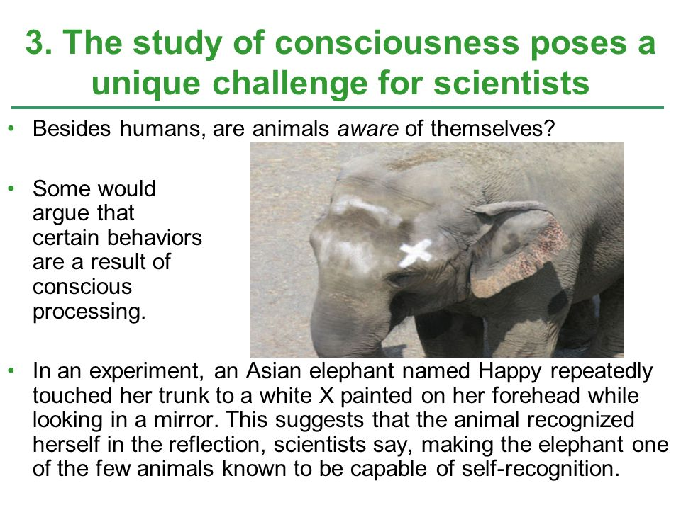 3. The study of consciousness poses a unique challenge for scientists