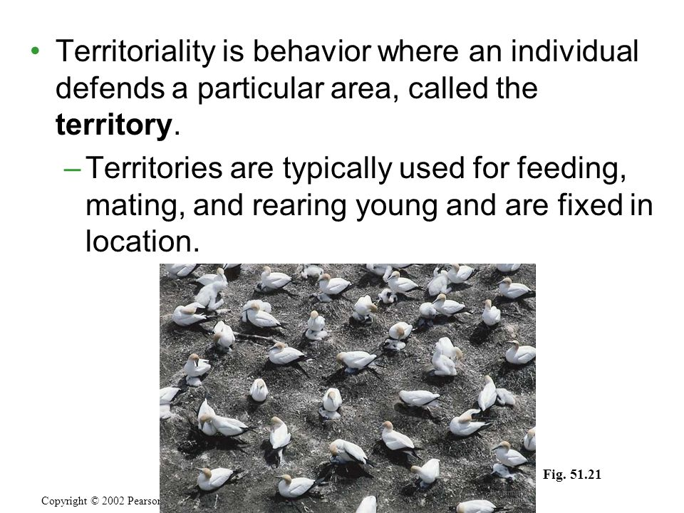 Territoriality is behavior where an individual defends a particular area, called the territory.