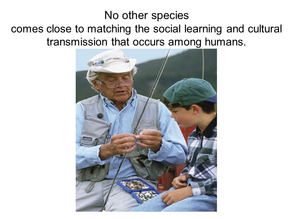 No other species comes close to matching the social learning and cultural transmission that occurs among humans.