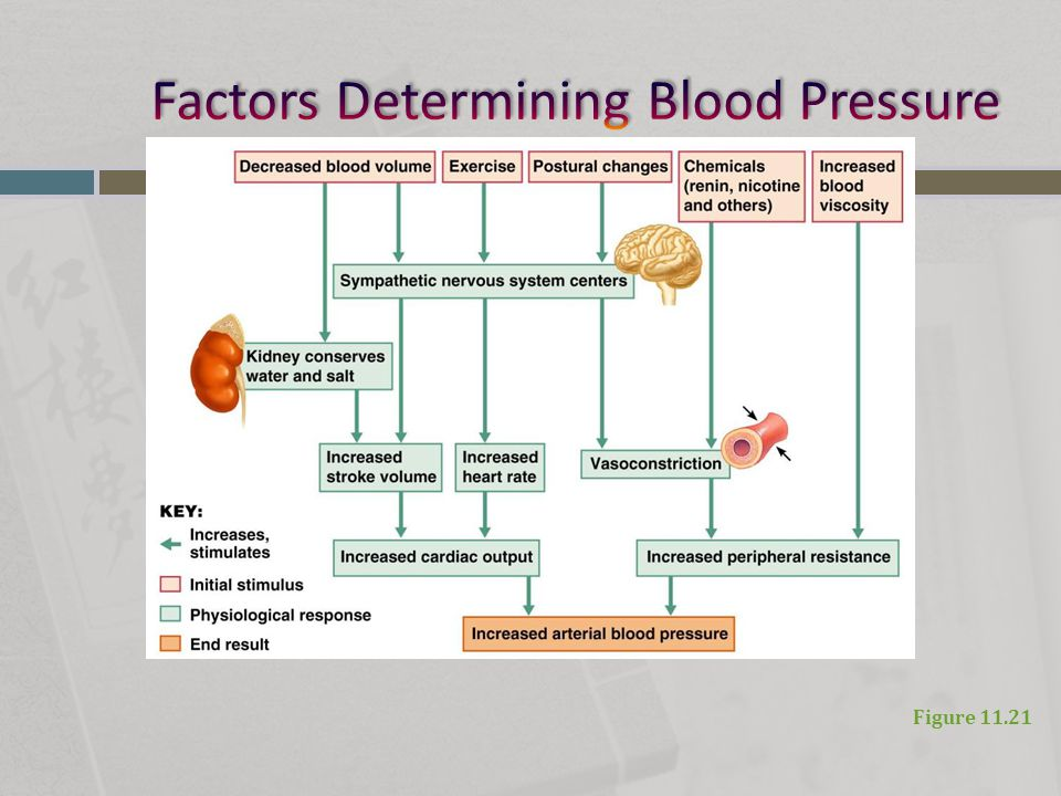 Factors Determining Blood Pressure