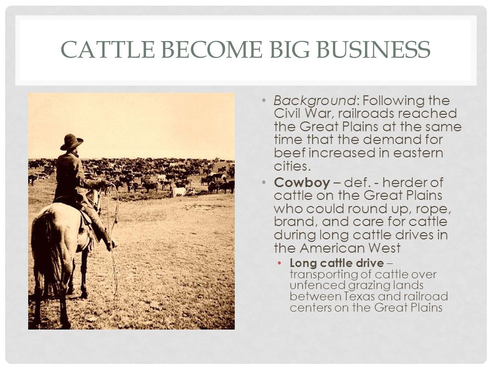 Cattle Become Big Business