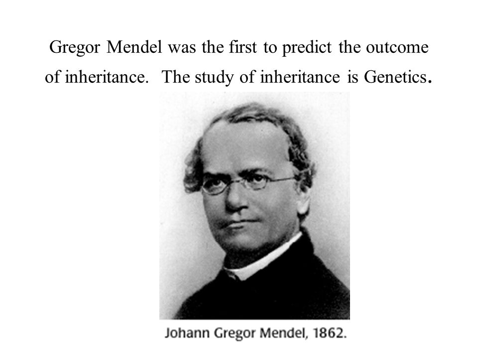 Gregor Mendel was the first to predict the outcome of inheritance